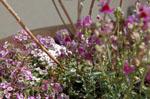 2011/9/3  9月のナイトスパDAY のイメージ画像